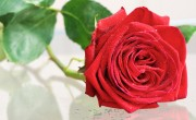 http://www.dreamstime.com/stock-image-red-rose-single-water-drops-image31610341